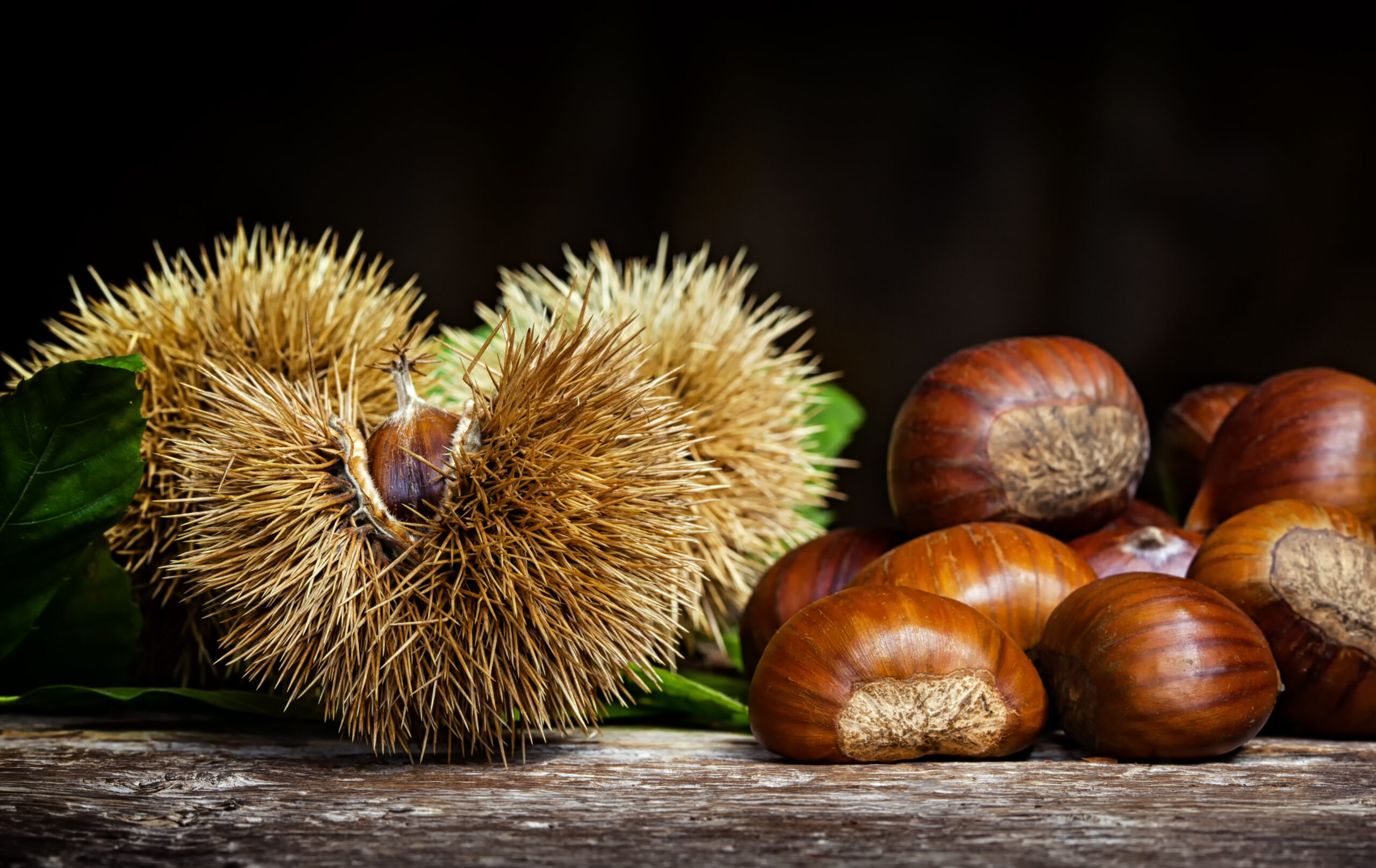 Is Horse Chestnut Safe To Use?