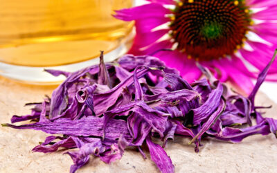 Cold and Flu Support: Echinacea and Elderberry