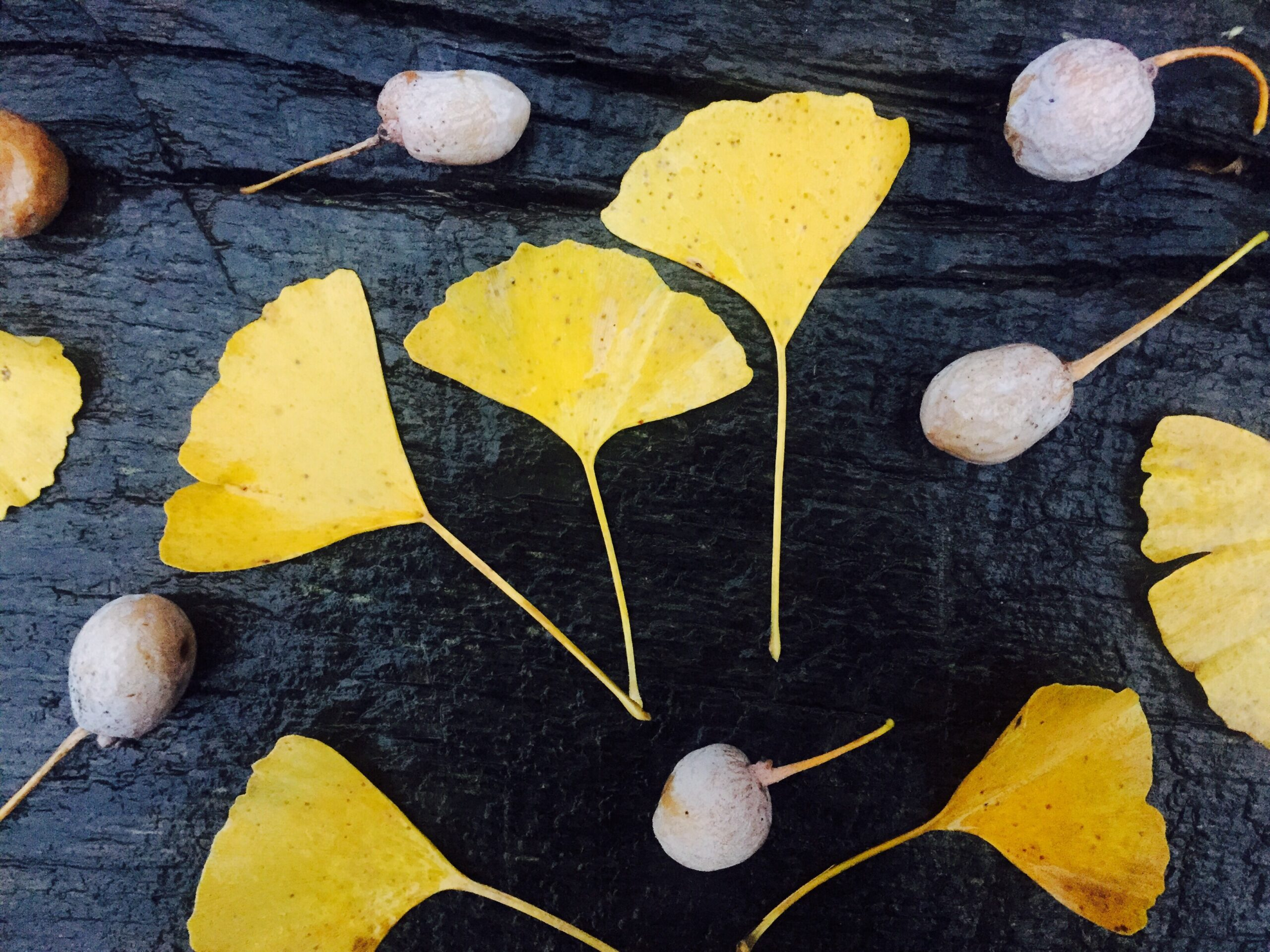Can Ginko Help To Heal Your Body?